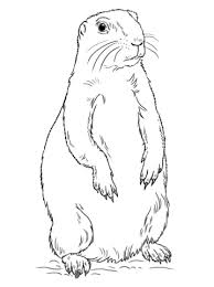 prairie dog coloring pages free coloring pages