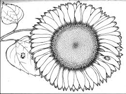 sunflower coloring page coloring sun flower coloring ideas 16625
