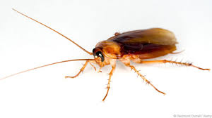 bbc earth the fastest insect in the world