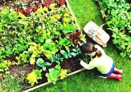 Raised Gardens For Beginners - how to grow a vegetable garden gardening for beginners growing