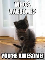 Good Luck Cat Meme - good runing vibes for laromana the bump