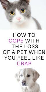 the loss of a pet how to cope with the of a pet radical transformation project