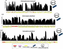 pervasive genome wide transcription in the organelle genomes of