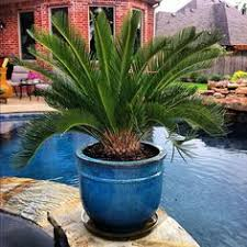 Tropical Potted Plants Outdoor - tropical style garden tropical plants patios and plants
