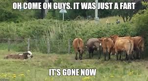 Cow Memes - lonley cow meme by borgster93 on deviantart
