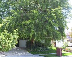 Good Backyard Trees by 24 Best Backyard Trees Images On Pinterest Backyard Trees