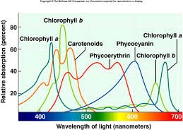 Where Do The Light Independent Reactions Occur Citrus College Chapter 6 Photosynthesis