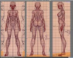 Female Anatomy Organs Best 25 Body Anatomy Ideas On Pinterest Female Body Art Body