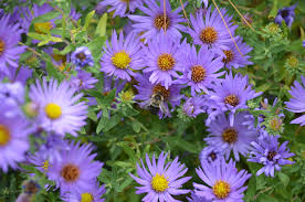 plants native to new york 10 most endangered plant species plants 2010