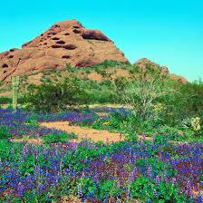 Scottsdale Botanical Gardens Desert Botanical Garden In Papago Park Usa Today