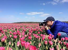 amazing tulip fields in the netherlands act of traveling