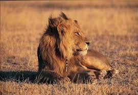 african safari animals safari tour