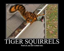 Like Your Own Post Meme - funny tiger squirrels meme shareology