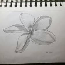 parrot drawing pencil 4b 2b back u0026white henderson art