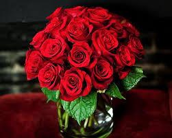 dozen of roses two dozen roses pave