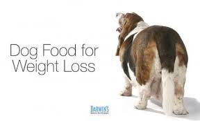 loss of dog helping your pets lose weight
