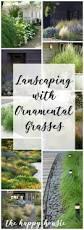 Ornamental Home Design Inc by 56 Best Grasses Images On Pinterest Ornamental Grasses Plants