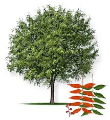 top ten trees to plant in okc oklahoma real estate homes for