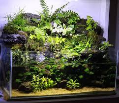 Aquascape Aquarium Designs 169 Best Aquascaping Nano Aquariums Images On Pinterest