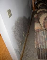 3681 best mold removal images on mold removal remove