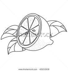 hand drawn sketch orange fruit vector stock vector 563864527