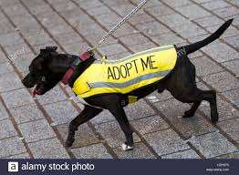 Seeking Liverpool Black Seeking New Owner Wearing Yellow Adopt Me Coat Stock
