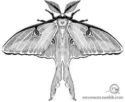 25 beautiful luna moth tattoo ideas on pinterest geometry