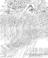 intricate coloring pages kids coloring pages