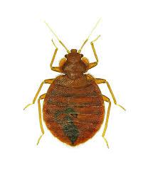 lights out bed bug killer bed bug control killer products professional bed bug sprays