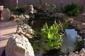 paddock pools trees scottsdale az home design ideas
