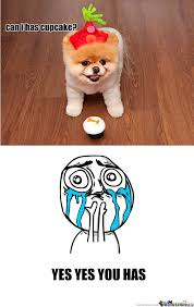 Cupcake Memes - can i has cupcake by katsuma101 meme center