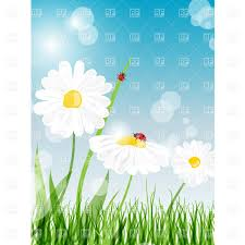 beautiful daisy flower on summer meadow with grass vector clipart