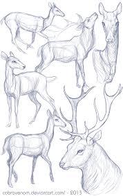 study deer by cobravenom on deviantart
