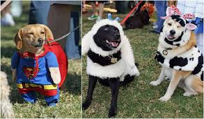 Halloween Costume Ideas For Pets Cute Halloween Costume Ideas For Your Pet Houston Chronicle