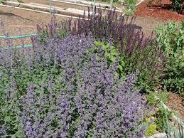 utah native plant society growing organic native pollinators