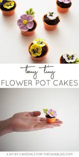 Cute Flower Pots by Best 20 Cupcake Flower Pots Ideas On Pinterest Cupcake Flower