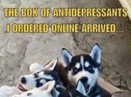 Cute Puppy Meme - dogs archives humor memes com