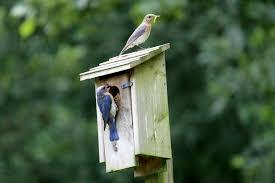 backyard battles similarities attract feederwatch