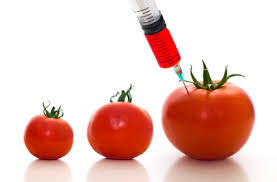 Island Chiropractic Center Gmos What Are Genetically Modified