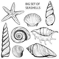 seashell tattoos