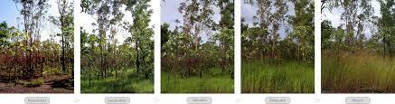 Tropical Savanna Dominant Plants - env509 module 2 characteristics of tropical savannas