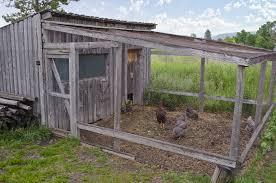 how to build chicken coop u2014 steveb interior
