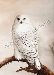 snowy owl watercolor painting african north american wildlife