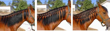 hairstyles for horses can i have a pony thinking about braiding
