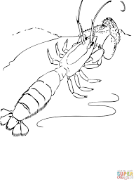 penaeid shrimp coloring page free printable coloring pages