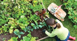 try square foot gardening growing more in less space garden