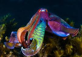 super colorful primo u2013 weird animals and strange creatures of the world