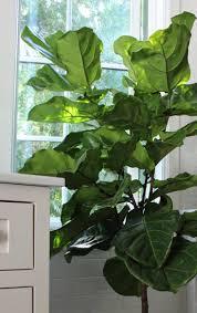 lighting wonderful best light for indoor plants cyclamen house