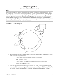 cell cycle regulation worksheet phoenixpayday com