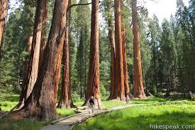 big trees trail sequoia hikespeak